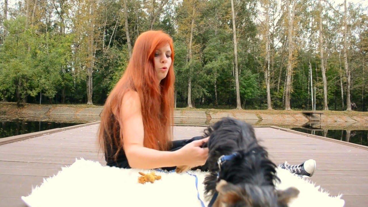Собаководство. Смотреть онлайн: Команда Дай лапу