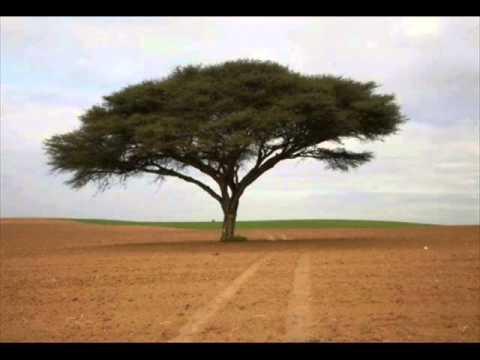 עצים מיוחדים - טו בשבט