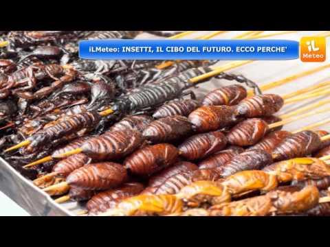 """insetti, secondo molti è il """"cibo del futuro"""""""