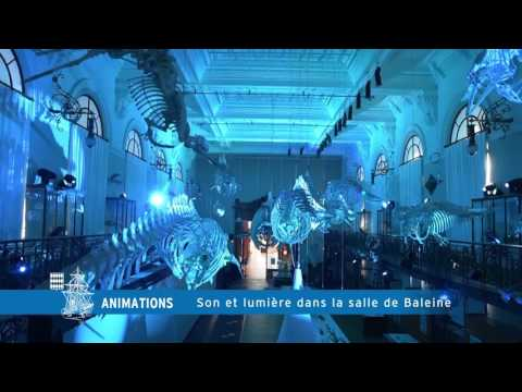 Son et lumière dans la salle de la baleine