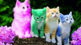 Video Cute Kitten Cat Colorful Learning Color Video For Kids - Funny Educational Videos for Kids Toddlers MP3, 3GP, MP4, WEBM, AVI, FLV Juni 2018