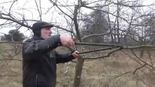 Video Jak przyciąć Jabłoń? How to prune an apple tree? MP3, 3GP, MP4, WEBM, AVI, FLV Maret 2019