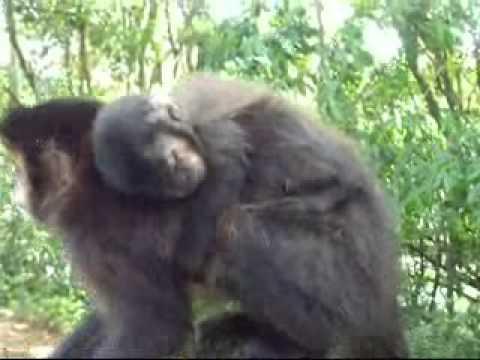 Parque Ecológico de Maracajá