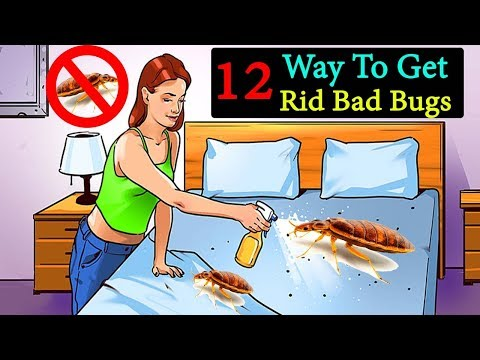 12 Ways To Get Rid Bed Bugs Naturally    How To Get Rid Of Bed Bugs     Life Hacks