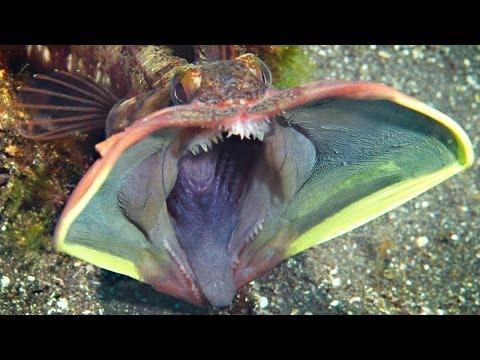 10 delle più stupefacenti creature marine mai scoperte!