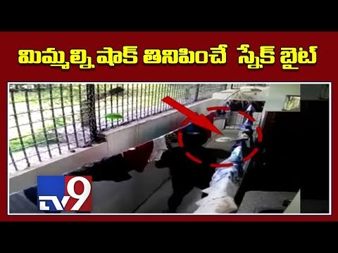 Caught On Camera : Snake Bites Man - TV9