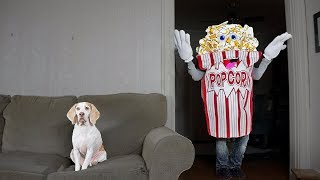 Funny Dog vs Giant Popcorn Man Prank: Funny Dog Maymo by Maymo