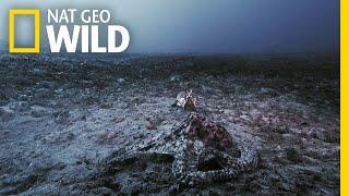 This Is What Happens When Underwater 'Aliens' Fight | Nat Geo Wild by Nat Geo WILD