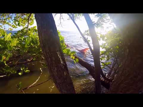 lo straordinario avvistamento di una splendida sirena bionda