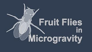 How Fruit Flies Help us Understand Human Responses to Microgravity by Johnson Space Center