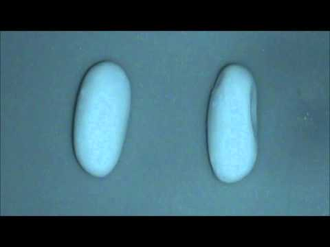 Crested Gecko Eggs - Humidity & Denting