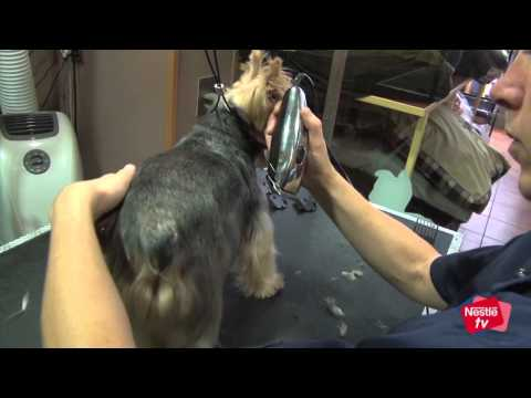 Cómo cortar el pelo a mi perro – Mascotas Nestlé TV