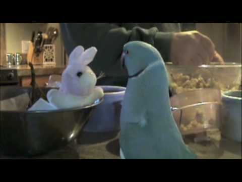 parrot loves new bunny