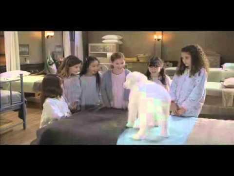 Avis Film À la recherche du chien Noel