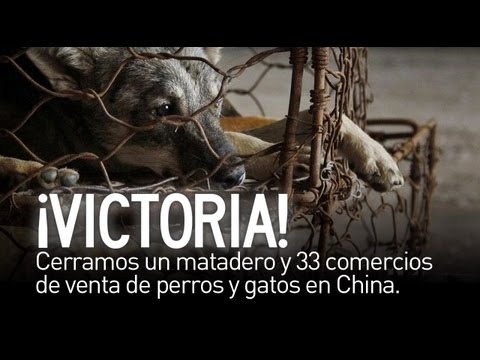 Desarticulada una red de consumo de carne de perro y gato en China