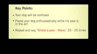 Dog Obedience! YouTube video