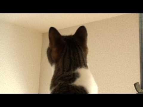 「[ネコ]これぞ蚊取りニャンコ!両手で蚊をやっつける賢い猫。」のイメージ