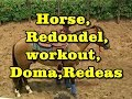 "Cavalo, Rédeas, "" Redondel "" Série "" The Horses"""