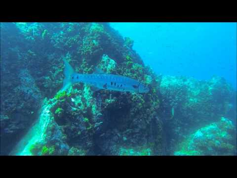 Mergulho em La Guasa: The Best Diving in Los Roques