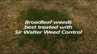 Controlling Invasive Grasses