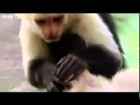 top Funny Animals (Hindi-Urdu) punjabi totay