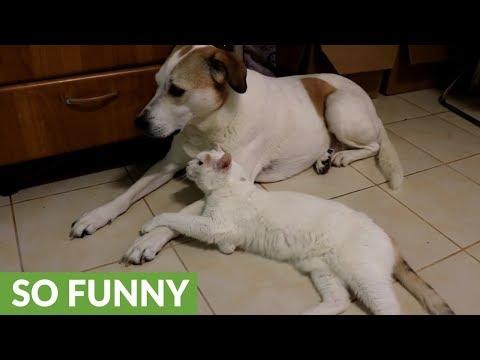 il-gatto-innamorato-del-cane