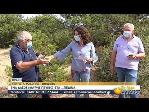 Πετρωτά Ροδόπης: Ένα δάσος μαύρης πεύκης στα πεδινά   28/9/2020   ΕΡΤ