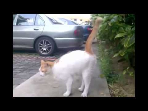 Ultraschall gegen Katzen - Katzenschreck Test