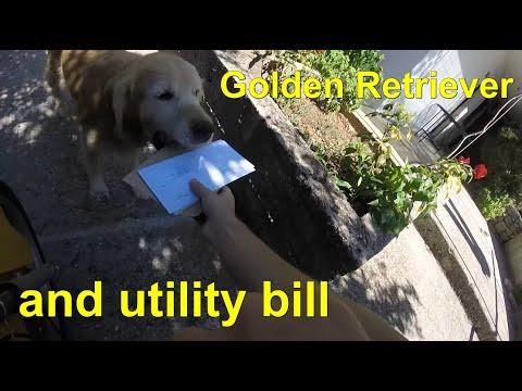 郵差先生呼喚屋主時卻只見黃金獵犬走出來,接著牠下一個動作就讓郵差天天想來送信!