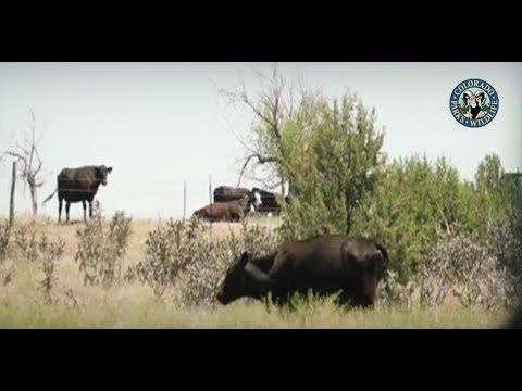 CPW Using Hydro Ax to Improve Wildlife Habitat