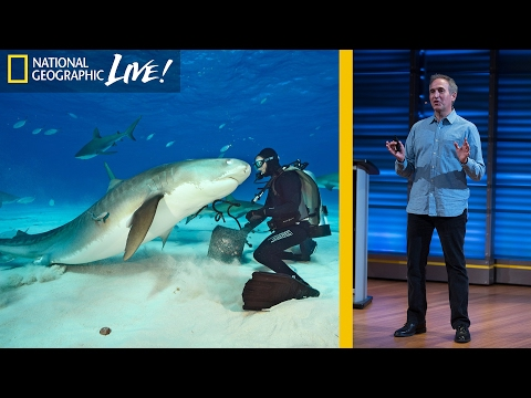 Swimming With Sharks: Photographing the Ocean's Top Predators (Part 1)   Nat Geo Live