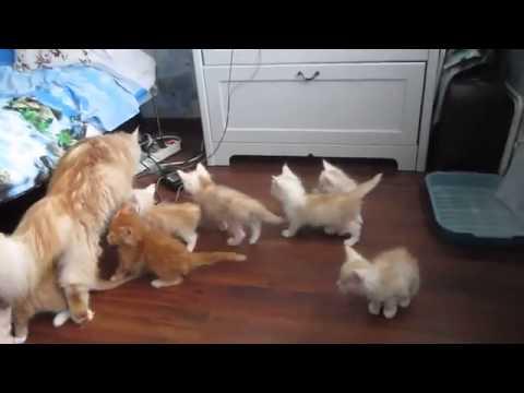 太好笑啦!小貓們全神貫注盯著媽媽的教學示範,沒想到最後卻...