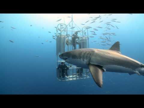 phim Cá Mập Trắng