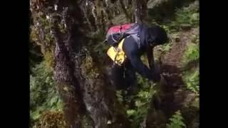 Video Jejak Petualang Survival - Pakis Binaiya VS Bambu Hutan MP3, 3GP, MP4, WEBM, AVI, FLV April 2019