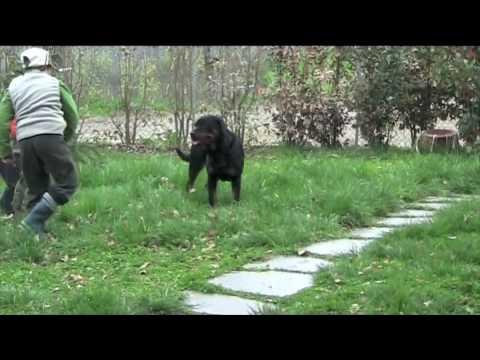Rottweiler e bambini....