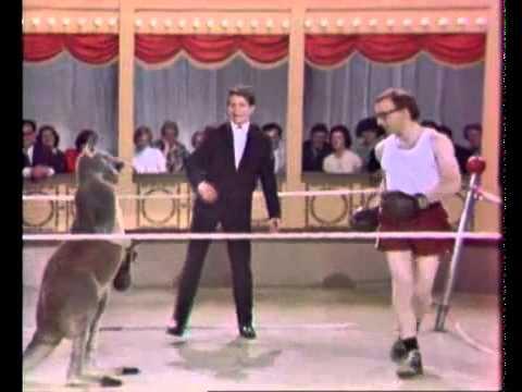 canguro - Woody Allen boxeando contra un canguro La nota: http://quejalada.com/2011/11/woody-allen-peleando-con-un-canguro/