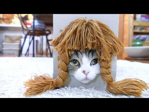 Maru the Famous Box Conquering Cat Tries On a Few Different Hairstyles Just for