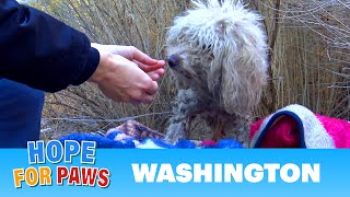 Badly injured stray poodle bites Hope For Paws rescuer and sends her to urgent care.