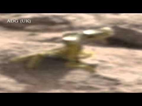 Shiny Gold Lizard On Mars? 2013 1080p HD