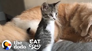 This Tiny Kitten Grows Up Racing Around Her House Like A T-Rex | The Dodo Cat Crazy by The Dodo