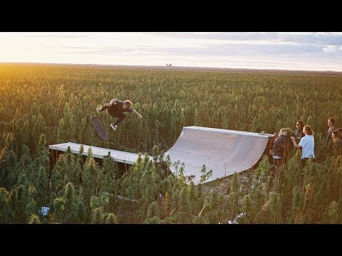 Australian skaters build ramp in massive weed field