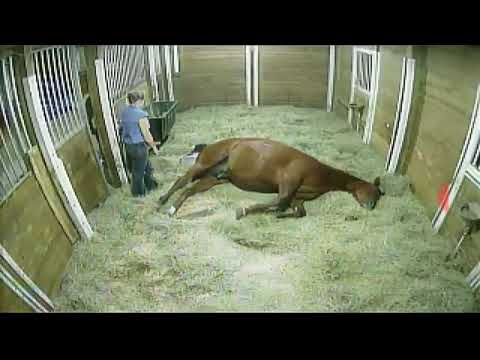 Video horse giving birth 1/20/2018 download in MP3, 3GP, MP4, WEBM, AVI, FLV January 2017