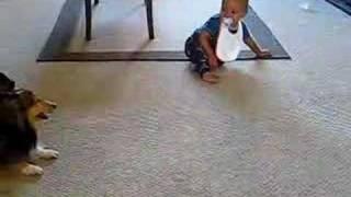 Nikt nie chciał uwierzyć, co jej pies wyprawia z dzieckiem! Chwyciła więc kamerę i nagrała niezwykły film!