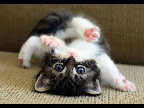 Funny cat videos - Cute Funny Kittens  Funny Cats (Full) [Funny Pets]