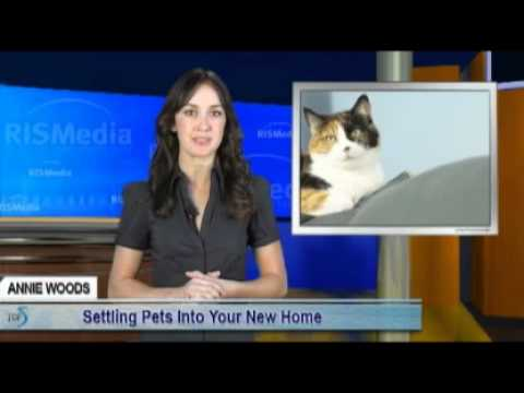Settling Pets Into Your New Home