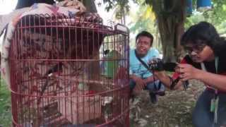 Video PIALA PANGLIMA TNI - Pemenang 50 Juta Murai Batu Gacor MP3, 3GP, MP4, WEBM, AVI, FLV September 2018