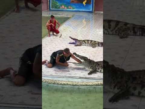 В Таиланде мужчина засунул руку в пасть крокодилу, но что-то пошло не так