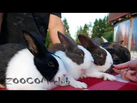 Почему как кролики?