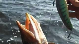 Рыбалка а Астрахани -джерк бейт 2.