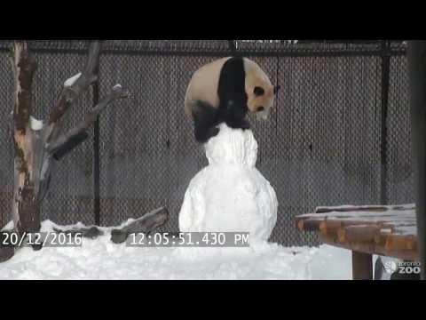 Kung Fu Panda taistelee lumiukkoa vastaan – katso video!